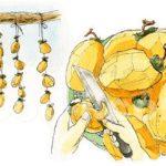 干し柿を作る。渋柿を剥いて干すだけ